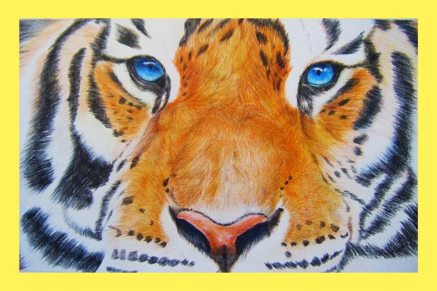 online hogyan rajzolj tigrist